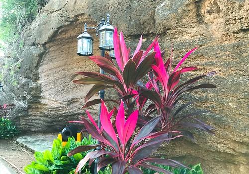Antigua foliage