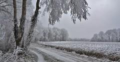 Binnenesweg - Havelte (henkmulder887) Tags: havelte binnenesweg havelterbinnenes gemeentewesterveld drenthe zwdrenthe holland thenetherlands natuur nature natura natur panorama winter wit glad ijs rijp vorst boom es bomen 99