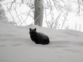 chat noir en cours de tentative de camouflage