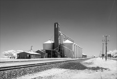 wycheproof-2364-ps-w (pw-pix) Tags: silos grain storage transfer rail railway tracks siding shed sheds grainsilos grainelevator equipment machinery industrial industry farming harvest grainharvest road trees fence wires powerlines poles rural agriculture ir infrared 720nminfrared irconvertednikon1v1 bw blackandwhite summer sunny hot cloudless wycheproof bulokeshire mallee northwestvictoria victoria australia