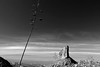 Superstition Mountains: Weaver's Needle (jswensen2012) Tags: arizona desert sonorandesert agave centuryplant peraltacanyon peraltatrail superstitionmountains weaversneedle monochrome blackandwhite