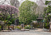 Early Spring in Tokyo (Rekishi no Tabi) Tags: chokokuji rinzai zen japanesebuddhisttemples spring plumblossoms tokyo edo japan leica