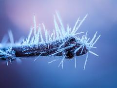 Ice (Markus Grasser) Tags: ice eis eiskristalle winter frost makro stacking fokusstacking olympus