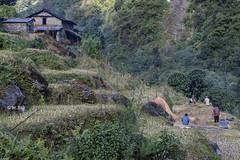 Annapurna Trekking (Henry der Mops) Tags: 90a5708 annapurna annapurnabasecamp trekking berge berglandschaft mountain mountainlandscape himalaya himalayas wandern mplez henrydermops canoneos7dmarkii nepal asien asia gebetsfahnen