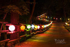 Light the way with all your colors (Boyd Images) Tags: road longexposure mountain night forest temple lights path dirt lanterns colorfullights nightshots southkorea bulyeongsa nikond7100