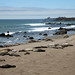 Colônia de elefantes marinhos em San Simeon