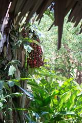 IMG_2466 (Cthonus) Tags: geotagged malaysia borneo longhouse rungus runguslonghouse