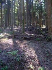 DSCF0827 (JohnSeb) Tags: trees tree forest germany deutschland rboles bosque arbre schwarzwald baum fort badenweiler johnseb bumen eurotour2012