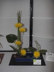 "Horsetail, Monstera Leaves & Chrysanthemum by Jennie Nagel ""Koryu School"" (nano.maus) Tags: lauritzengardens japaneseflowerarrangement omahabotanicalsociety japaneseambiencefestival"