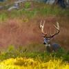 Michigan Whitetail Hunt 31