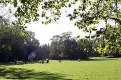IMG_2867-Modifier (mycenium) Tags: panorama belgium belgique farm bow land prairie chateau region campagne brabant ferme bois vache wallon wallonie grez grezdoiceau laurensart wallone doiceau