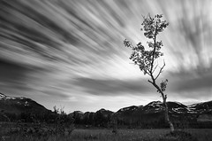 Movements above (Ron Jansen - EyeSeeLight Photography) Tags: longexposure sky blackandwhite cloud tree monochrome norway clouds drag one alone arctic valley solitary haida singular troms svensby nd1000 nakkefjellet stortuva 10stopper trollvasselva lomssen smtuva