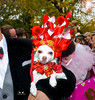 Anthony Rubio attends the 25th Annual Tompkins Square Halloween Dog Parade (Anthony Rubio Pet Fashion Designer) Tags: newyorkcity chihuahua halloween batman batdog howloween dogparade dogcostume 25thannual tompkinssquarehalloweendogparade anthonyrubio