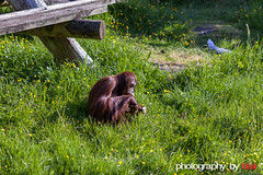 Auckland Zoo 2015 (Photography By Blair) Tags: animals naturallight aucklandzoo 135mmf2l canon5dmkii