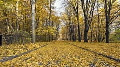 2015-11-11_06-57-03 (wiktor_furmaniak) Tags: park autumn color yellow sony wideangle natureshots 10mm samyang passionphotography beautyfulnature todaysbest manuallenses lovenatura naturecomposition absolutelyperrrfect mostbeautyfulpictures alpha65