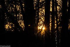 A travers la fort (Deathscythe42) Tags: sunset sun nature canon landscape soleil ombre paysage loire contrejour coucherdesoleil rhnealpes frapna eos70d tamronsp70300vcusd ecopleduforez