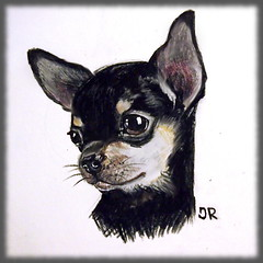 scetch of my friend's chihuahua (JRDolls) Tags: dog pet chihuahua puppy drawing doggie scetch