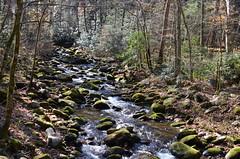 Stream in Smoky Mountains_8596 (Porch Dog) Tags: november vacation tennessee smokymountains 2015 garywhittington roaringforksmotortrail nikon18300mm nikond7000