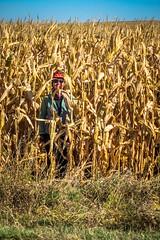 Lots of corn fields in Colorado, one even growing sweethearts.