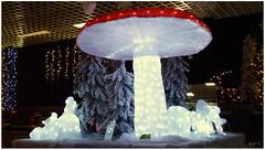 DSCI8496 (aad.born) Tags: christmas xmas weihnachten navidad noel  tuin engel nol natale  kerstmis kerstboom kerst boi kerststal  kribbe versiering kerstshow  kerstversiering kerstballen kersfees kerstdecoratie tuincentrum kerstengel  attributen kerstkind kerstgroep aadborn nativitatis