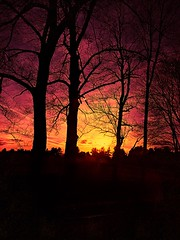 Sunsets and Silhouettes (Scorpiol13) Tags: pink trees sunset red sky black yellow skyline skyscape twilight colorful mood purple bright vibrant branches horizon silhouettes hdr silhouettedtrees