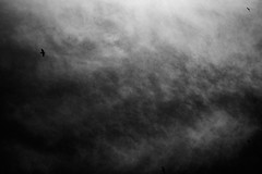 (bendikjohan) Tags: sky bw white black bird film nature birds oslo norway clouds landscape blw 1600 neopan bnw bl