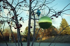 'Tis the season (GJosephT) Tags: holiday tree kodak 400 28 40mm canonet ultramax