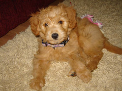 gracieshes-one-of-morgan-and-chewys-little-girls--shes-lovin-her-new-family-_2680797446_o