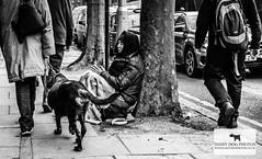 Life on the streets of London (DaisyDogPhotos) Tags: street homeless karenbrammer c all rights reserved karen brammer 2016 blackandwhite
