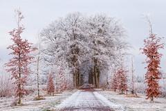 Nienoord Leek Westerkwartier Groningen Netherlands (Reina Smallenbroek) Tags: reinasmallenbroek nienoordleek nienoordsingel groningen westerkwartier winter rijp bomen trees snow