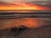 The fallen (Trojan Wonder) Tags: beach sand clouds movement colours foreshore long exposure leaf palm sunset yellow red surf