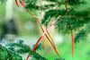 Christmas tree in the street (PokemonaDeChroma) Tags: christmas tree pines red ribbon green freshness bright bokeh depthoffield dof canon6d december 2016 paris france