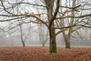 Goodbye Autumn (dave:w:) Tags: aquadrome fog a7r