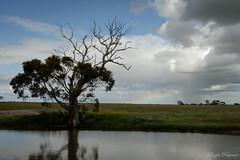(Laszlo Papinot) Tags: cloud plain pond lake tree youyangs rain storm rainbow sky