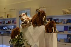 Kerstman in de museumwinkel (zaqina) Tags: drentsmuseum museumwinkel mammoet mammoets kerstman kerst slee