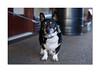 My new best friend (hehaden) Tags: dog terrier platform sheffieldpark station bluebellrailway sussex sel55f18z