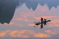 As Above, So Below (Marsel van Oosten) Tags: select asia china yangshuo guilin cormorant fisherman water river reflection mountains clouds sunrise tradition traditional culture phototour workshop squiver marselvanoosten oriental fareast