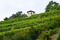 Weinberg (Uwe Brandt) Tags: weinberg outdoor haus house green nature nordbaden zaberfeld wine