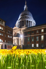GARDEN OF LIGHT (Mark John Nepomuceno) Tags: mariecurie daffodil installation stpauls london yellow dome uk