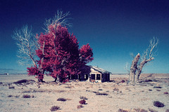 dustbowl (color infrared). mojave desert, ca. 2016. (eyetwist) Tags: eyetwistkevinballuff eyetwist color infrared eir mojavedesert farmhouse abandoned california nikon n90s nikkor 28105mmf3545d 28105mm infracolor bw099 099 kodak ektachromecolorinfrared lenstagger ishootfilm ishootkodak film analog analogue emulsion coolscan iconla mojave desert southwest usa falsecolor landscape aerochrome 35mm antelopevalley av ruins derelict decay dead dustbowl windblown farm joads grapesofwrath tree stump cottonwood house lancaster palmdale