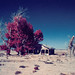 dustbowl (color infrared). mojave desert, ca. 2016.