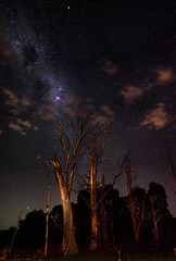 Carina Nebula - Harvey Dam, Western Australia (inefekt69) Tags: harvey dam trees deadtree hoya redintensifier didymium panorama stitched mosaic milky way cosmology southernhemisphere cosmos southern westernaustralia australia dslr long exposure rural nightphotography nikon stars astronomy space galaxy astrophotography outdoor milkyway ancient sky 50mm d5100 landscape nebula etacarinae carina coal sack clouds