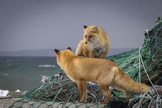atop the netting