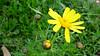 Salamis - basilica flower