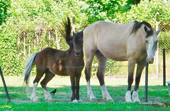 pônei (jakza - Jaque Zattera) Tags: jakza dois cavalo grande pequeno opostos extremos