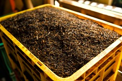 Black Tea (alisdair jones) Tags: ef35mmf14lusm black tea factory kandy srilanka
