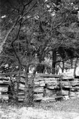 Il cantiere infinito (sirio174 (anche su Lomography)) Tags: cantiere paratie lungolago esondazione lago lake lario lagodicomo como comolake scempio