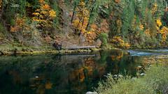 Reflected Fall Colors on the North Umpqua River (Lone Rock) Tags: oregon reflections fallcolor unitedstates glide northumpquariver