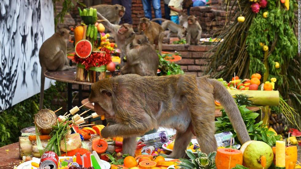 Tiệc buffet cho khỉ, tỉnh Lopburi, Thái Lan