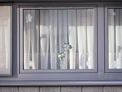 kneuterig (emmapatsie) Tags: kat cosy raam gordijnen glasgordijn